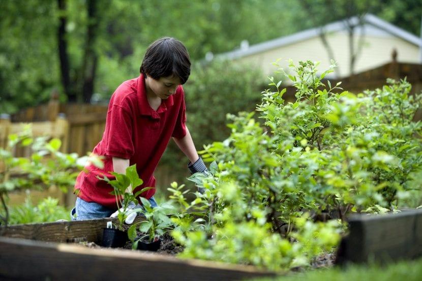 Niño jardinero con guantes