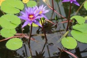 Que es una planta acuática