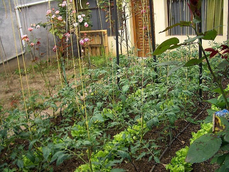 Qu es un huerto escolar for Que plantas se siembran en un huerto