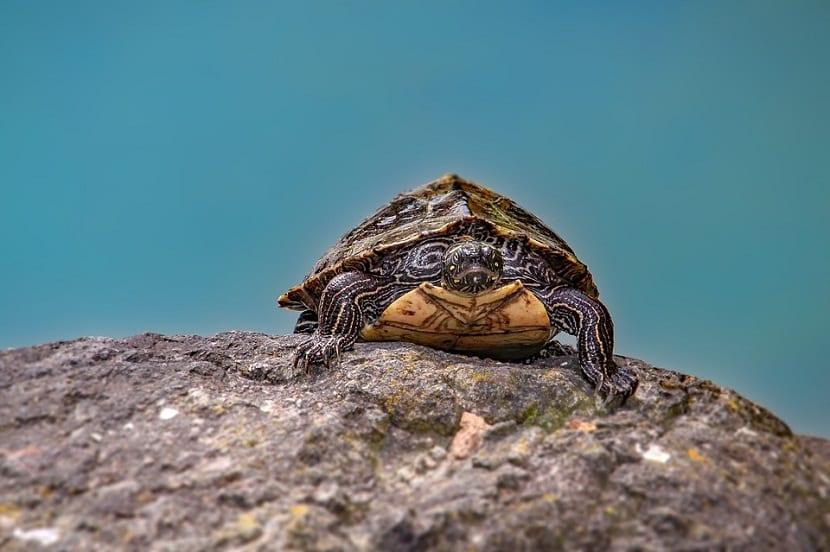 Conocer la especie de la tortuga y sus caracteristicas