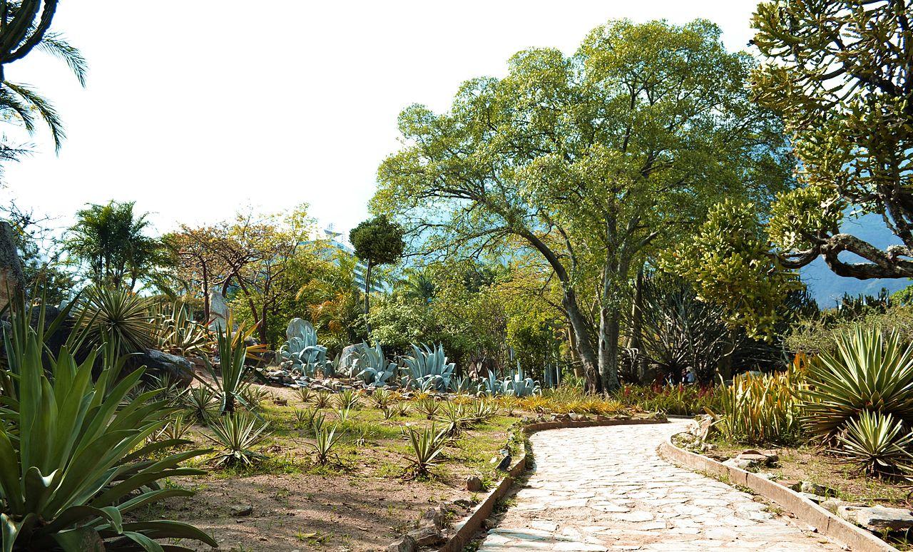 Un xerojardín es un jardín de bajo mantenimiento