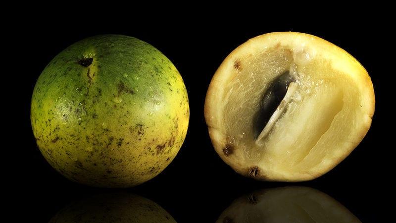 Frutos del caimito