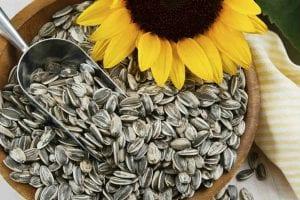 Propiedades y cultivo de las pipas de girasol