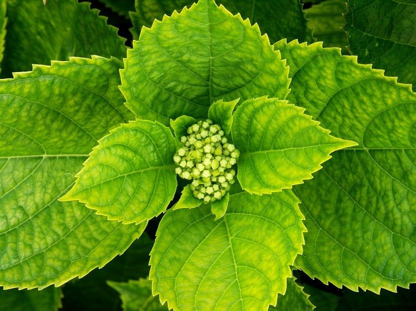 cuidados plantas acidas