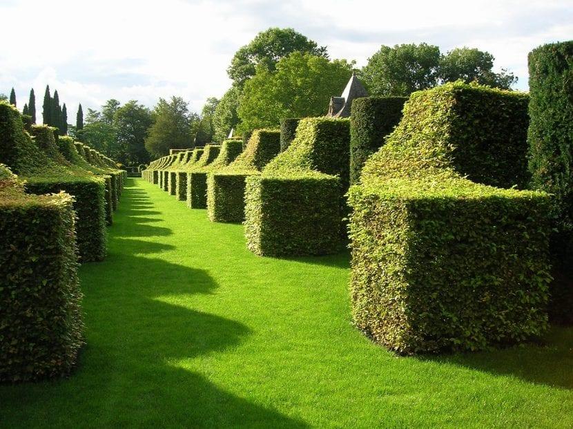 Los setos del jardín francés son bajos