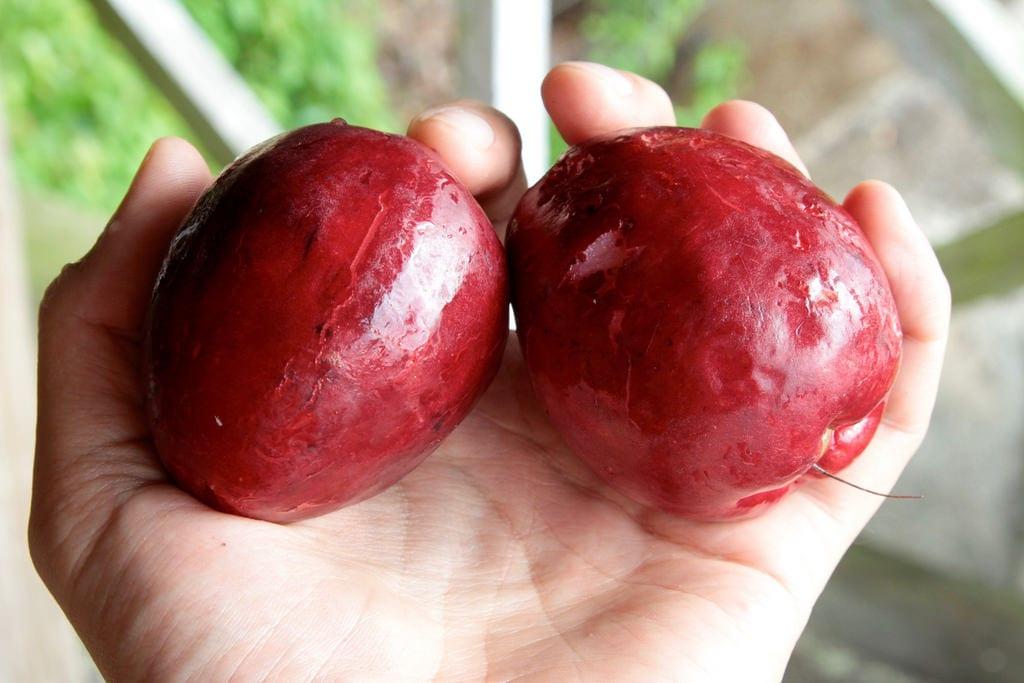 Frutos del marañón japonés