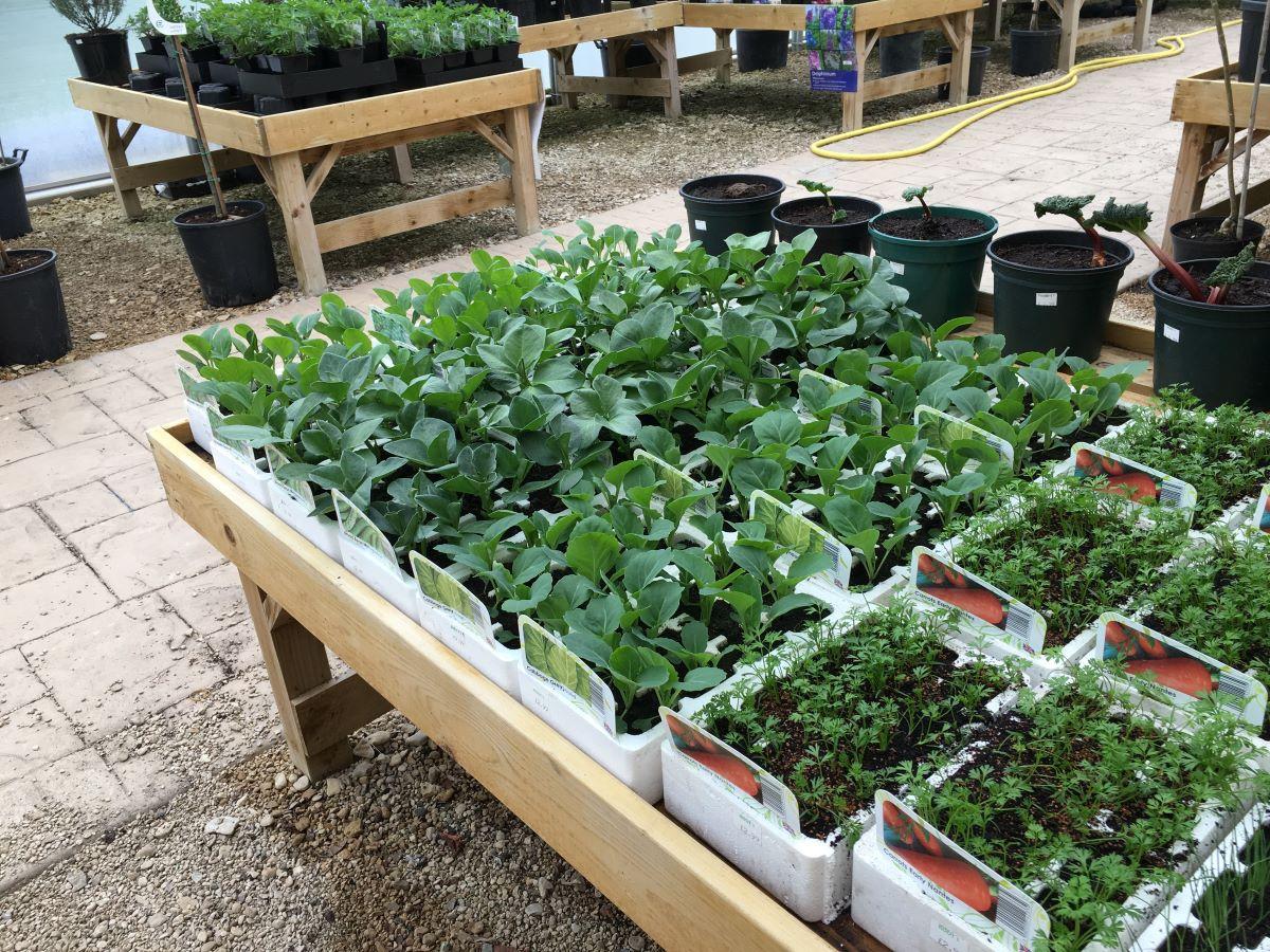 La mesa de cultivo puede ser de madera o plástico