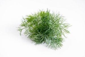 s una planta que pertenece a la familia de las opiáceas