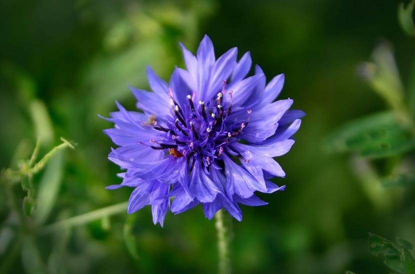 Clasificacion Y Caracteristicas De Los Tipos De Flores Que Existen