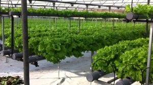 son dos de los procedimientos más amplios que se conocen en cuanto al cultivo de las plantas