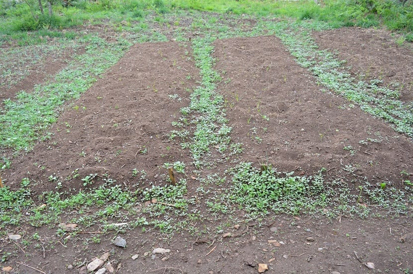 El propósito de la siembra falsa es disminuir la competencia entre las plantas cultivadas y las malas hierbas