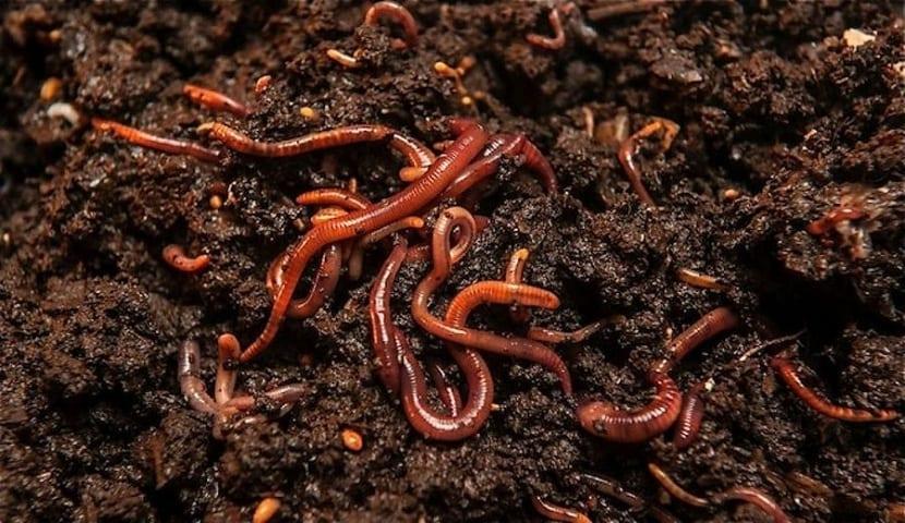 Materia orgánica generada por la lombriz