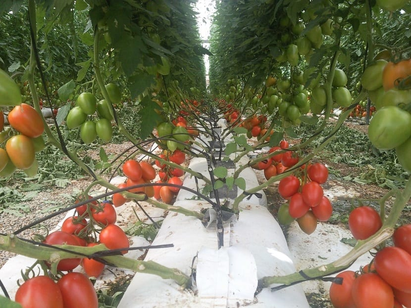 Perlita en cultivos hidropónicos