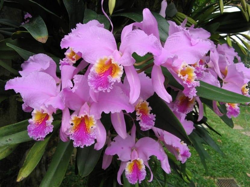 características de las orquídeas