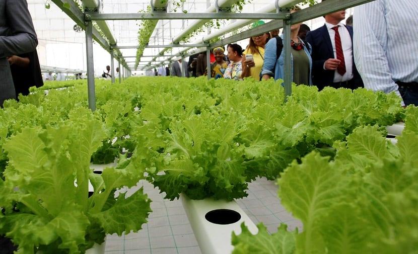 Estos dos métodos mencionados en la parte anterior son muy distintos a la forma tradicional de cultivo
