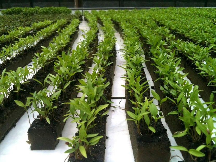 Esta técnica para cultivar se basa en que todos los nutrientes que utiliza la planta para poder alimentarse se diluyen en el agua