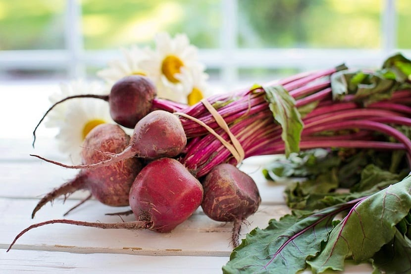 ¿Como cosechar y almacenar la remolacha?