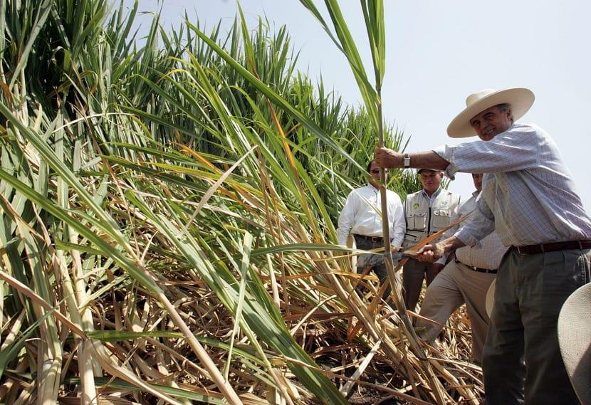 Producción de caña de azúcar a nivel mundial