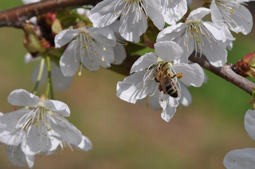 A menudo un árbol frutal necesita de la presencia de otro árbol de su misma especie para que de esta forma se permita la fertilización