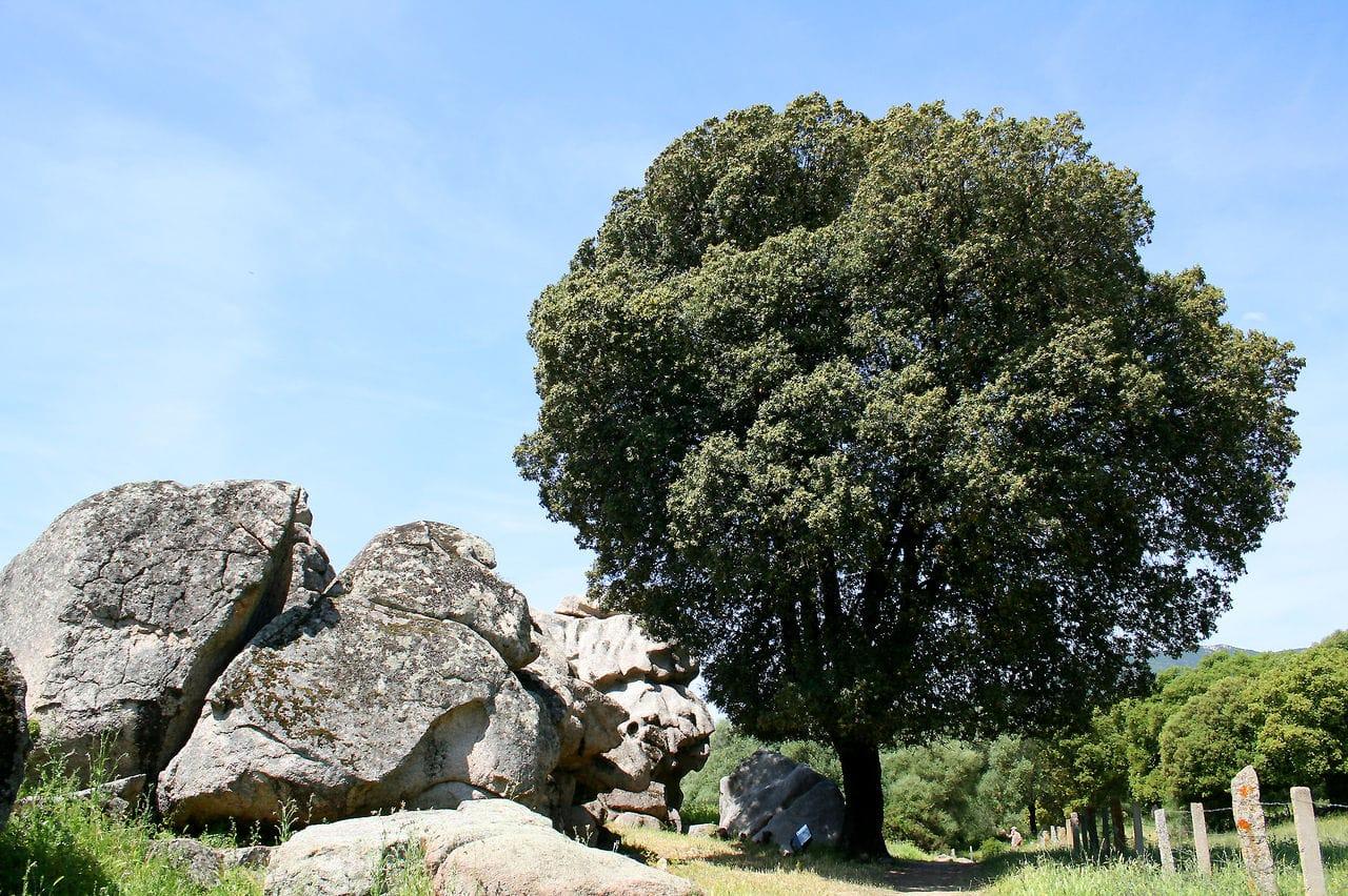 Vista del árbol de encina
