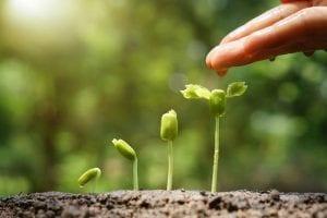 La soja es una planta que forma parte de la familia fabaceace o también conocida como las leguminosas