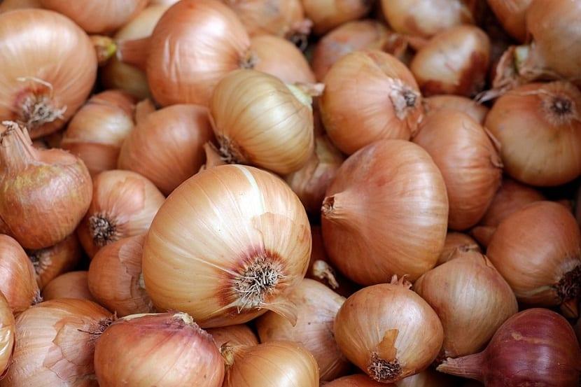 Las cebollas tienen tres colores principales, blanco, rojo y dorado, cada una de ellas con un sabor que las diferencia.