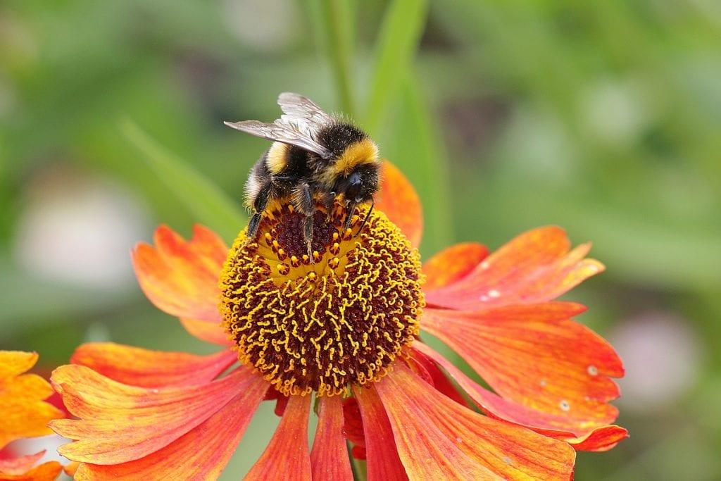 Las flores suelen ser atractivas para los insectos