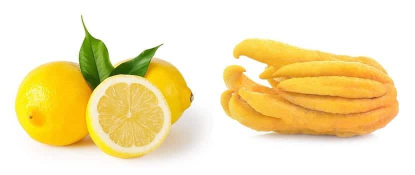 Diferentes tipos de limones