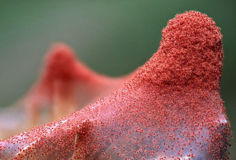 La araña roja es una plaga que afecta a muchas plantas