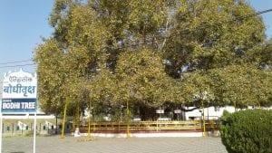 Árbol de Bochi