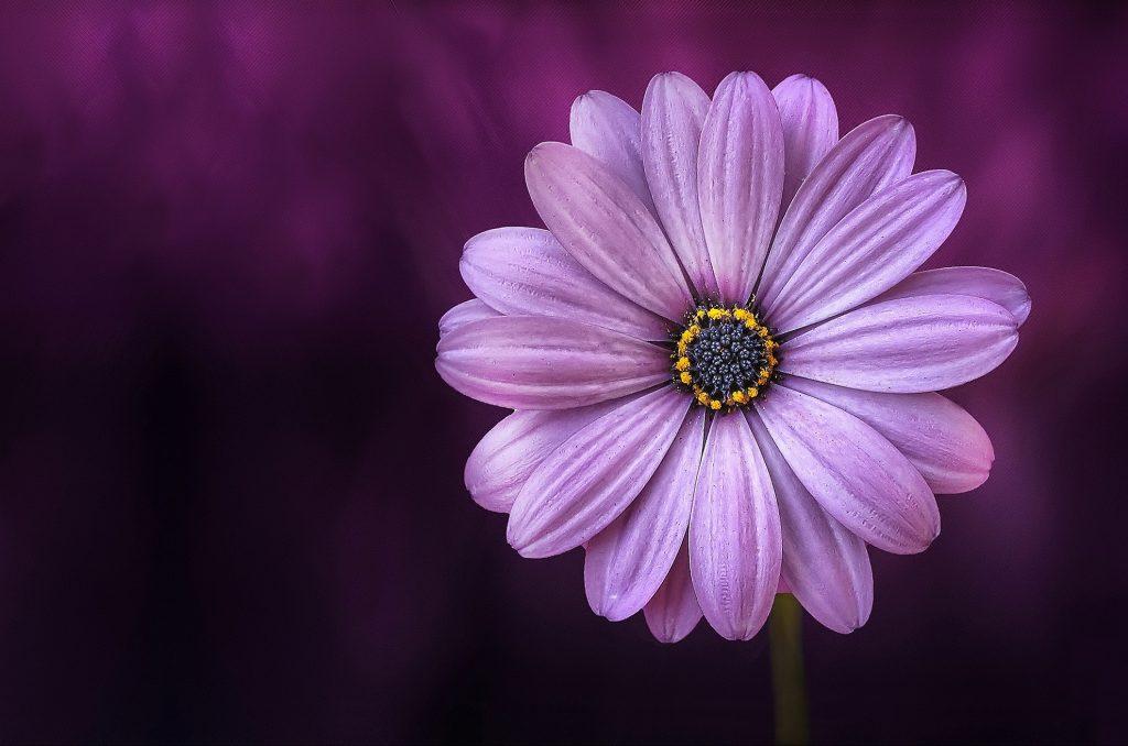 Las flores son elementos decorativos