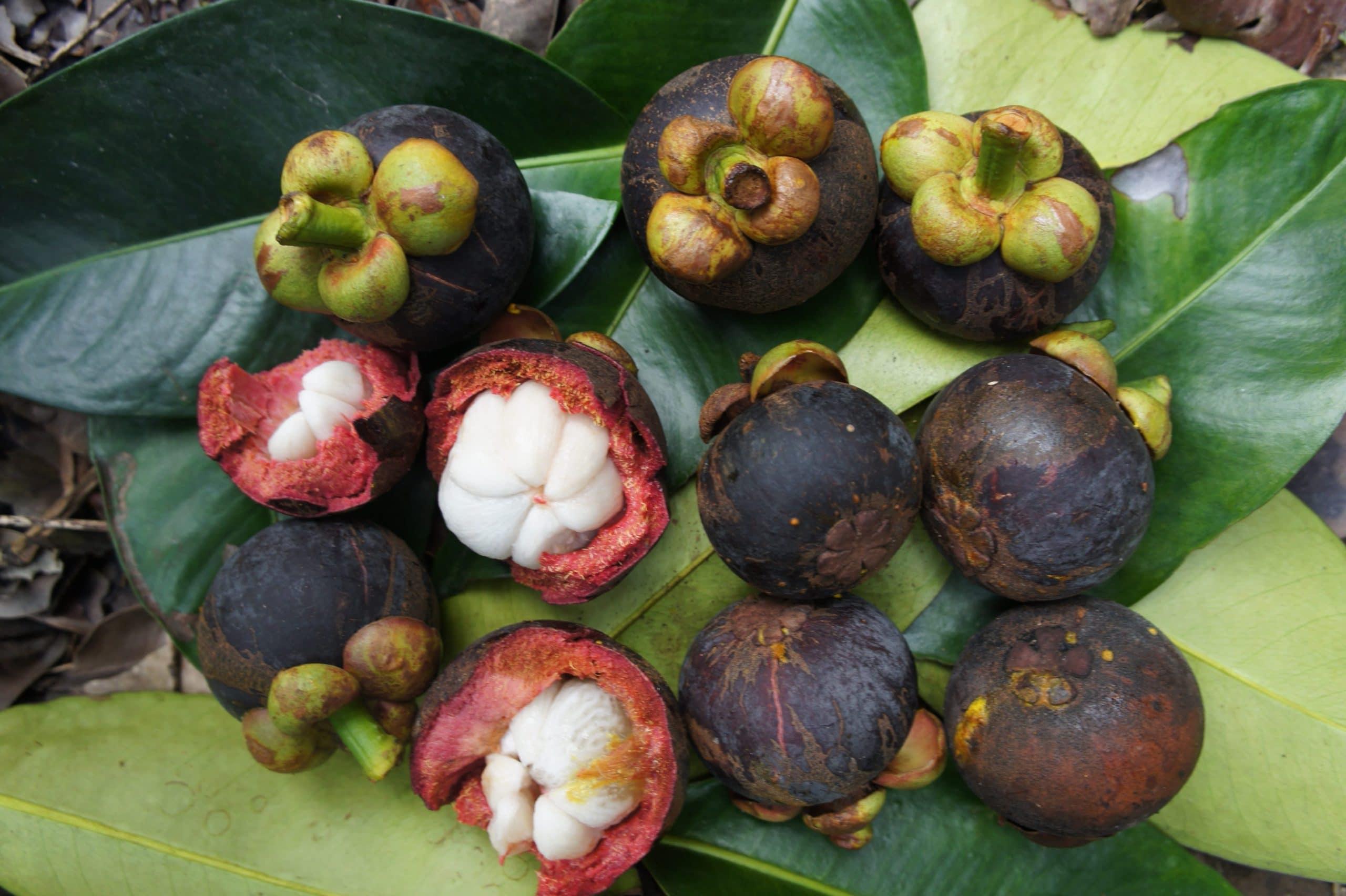 Los frutos del mangostán tienen un sabor dulce delicioso