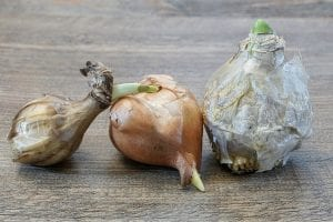 tipos de bulbos y diferencias
