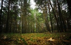 Los sotobosques son areas que se encuentran debajo de los arboles que son mas altos