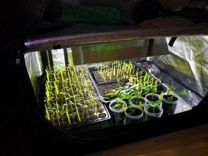 armarios de cultivo interior para plantas