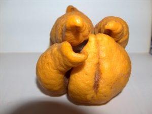 Limones afectados por el ácaro de las maravillas