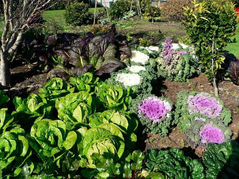Cultivo en casa