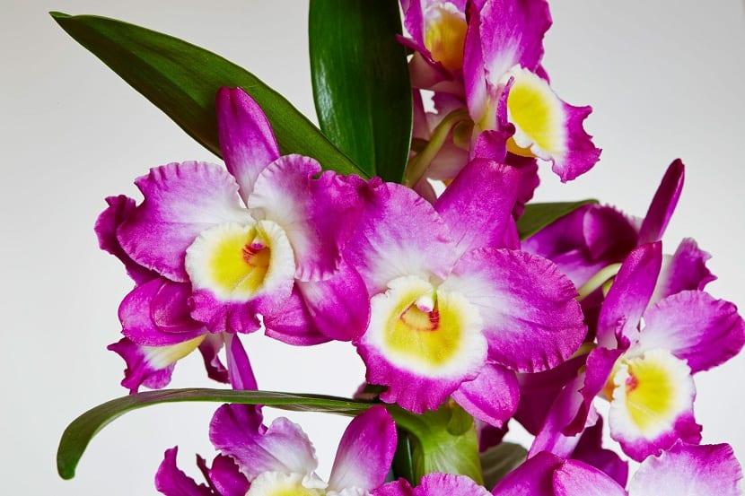 cuidados necesarios de las orquídeas
