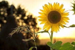 Todas las plantas necesitan luz para poder completar la fotosintesis