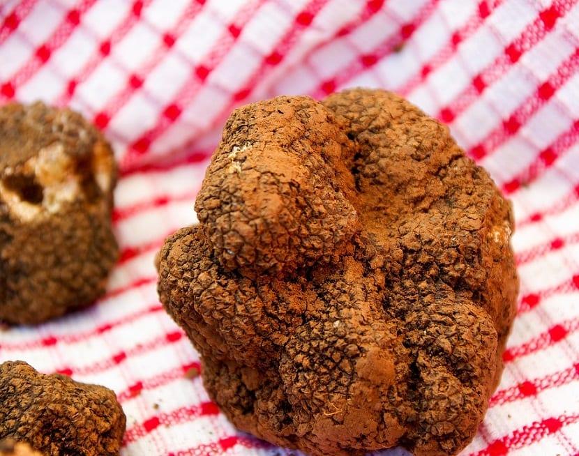 las trufas son un hongo que crece en la base de los arboles