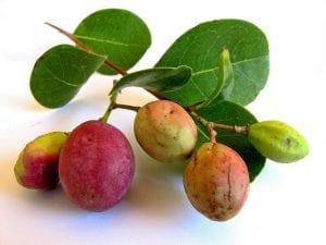Fruta del icaco