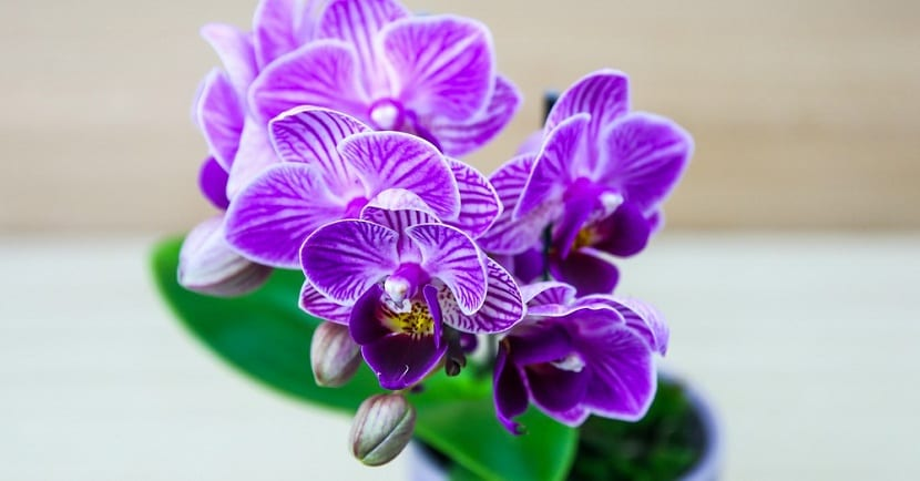 riego de las orquídeas