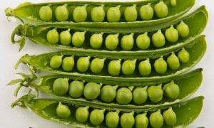 El guisante se trata un cultivo principalmente de clima templado y un poco húmedo