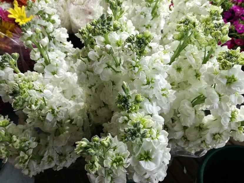 Plumeria alba de color blanco en un ramo de flores