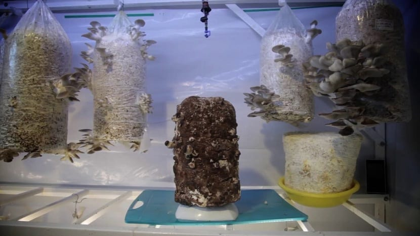 cultivo de hongos con humedad