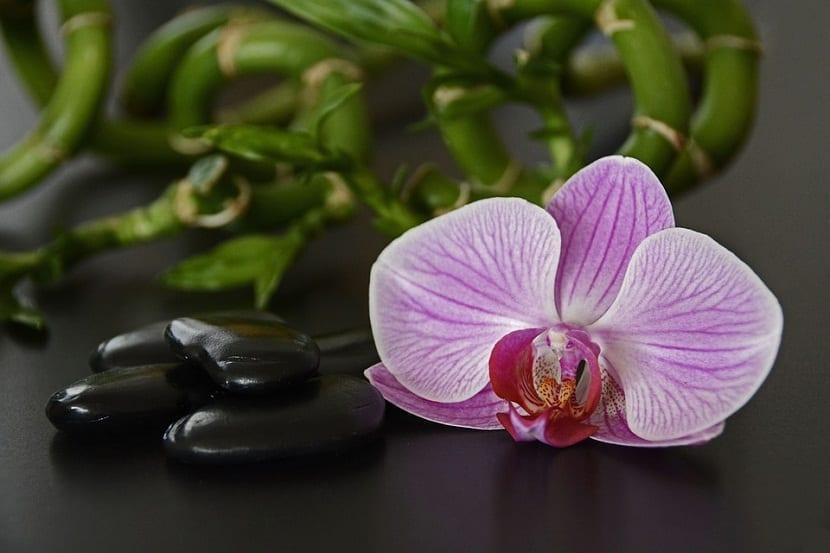 decoracion con Bambu de la suerte y una orquidea