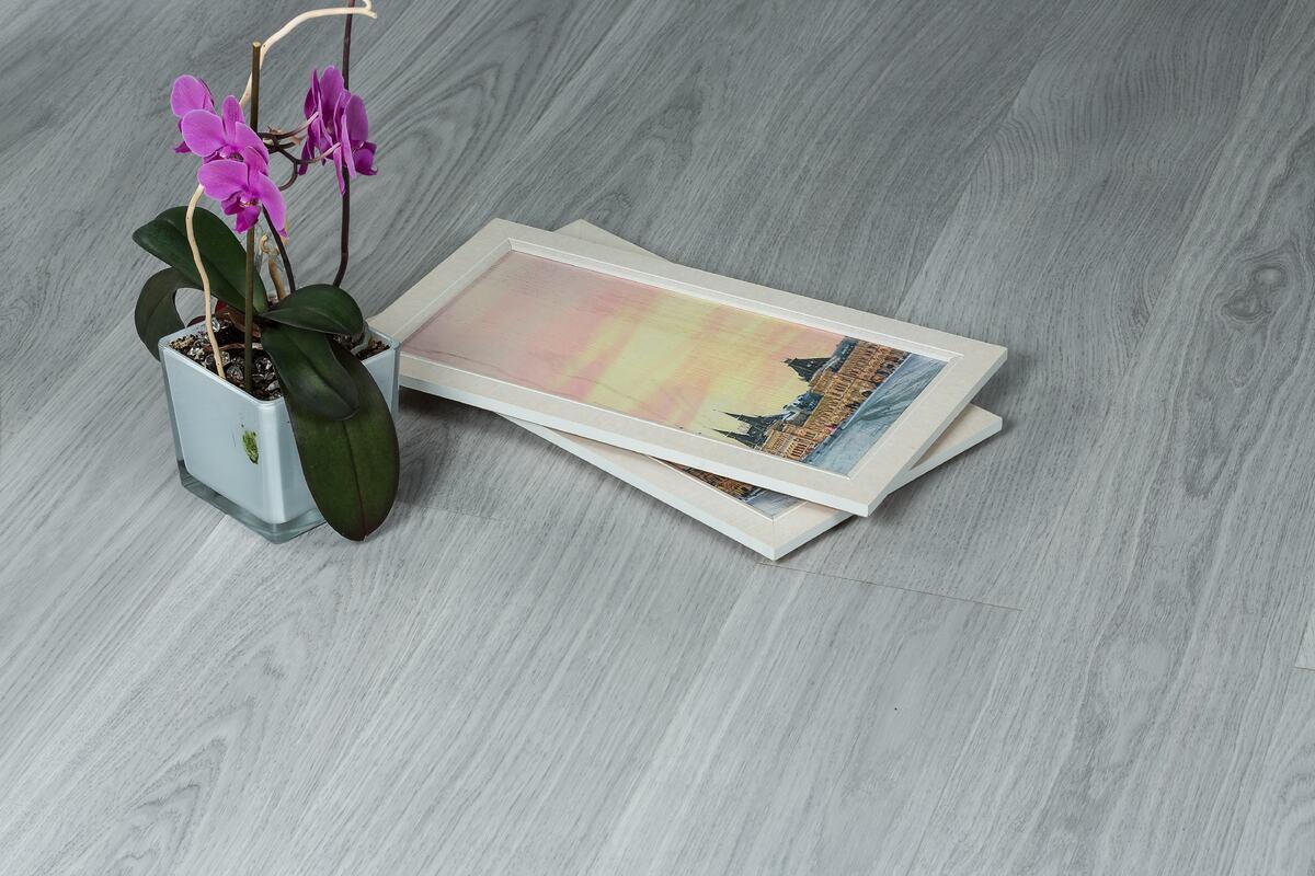 Las orquídeas se pueden cultivar en casa