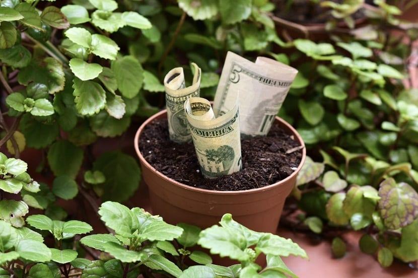planta millonaria en maceta que atrae el dinero