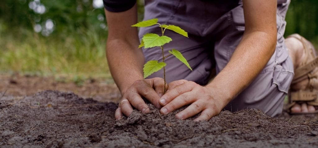 Árbol joven plantado