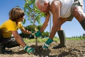 Los árboles se plantan cuando no están creciendo